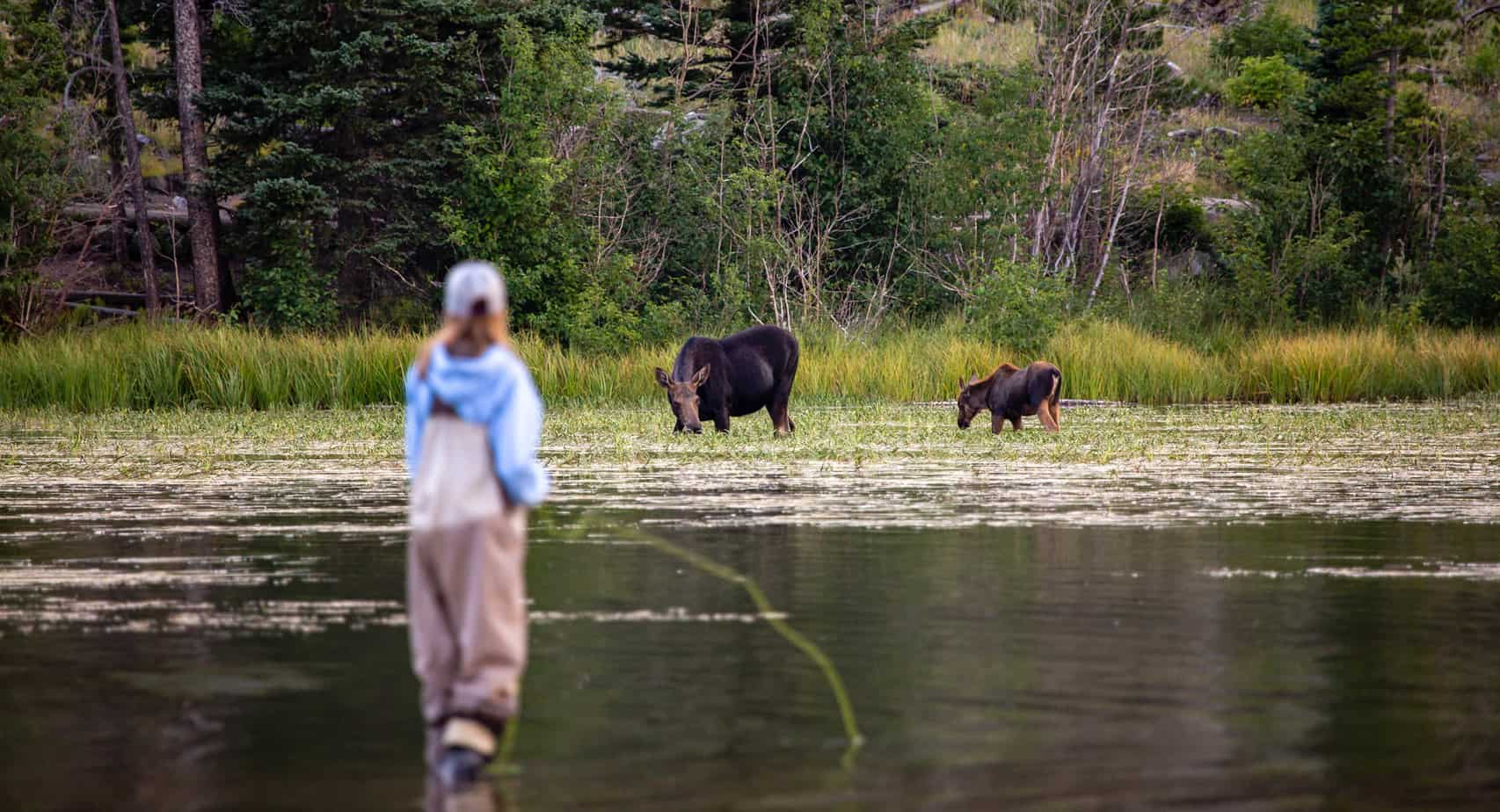 Best Fly Fishing In Wyoming