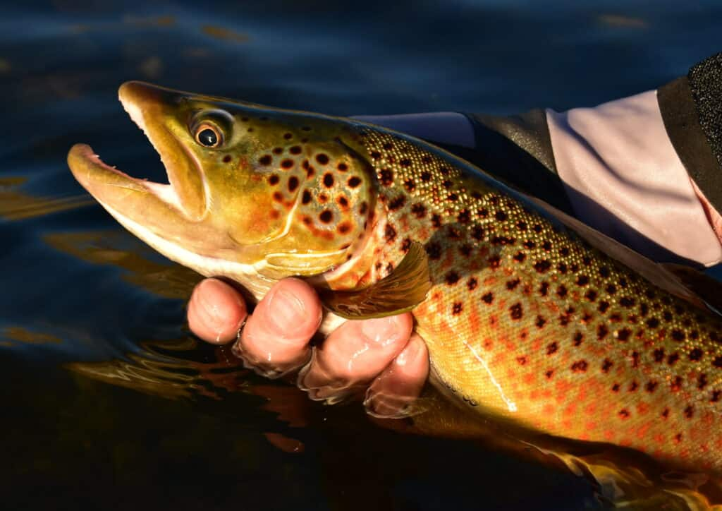 Trout Fishing In Wyoming