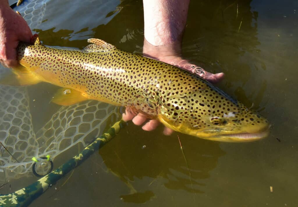 Wet Fly Fishing