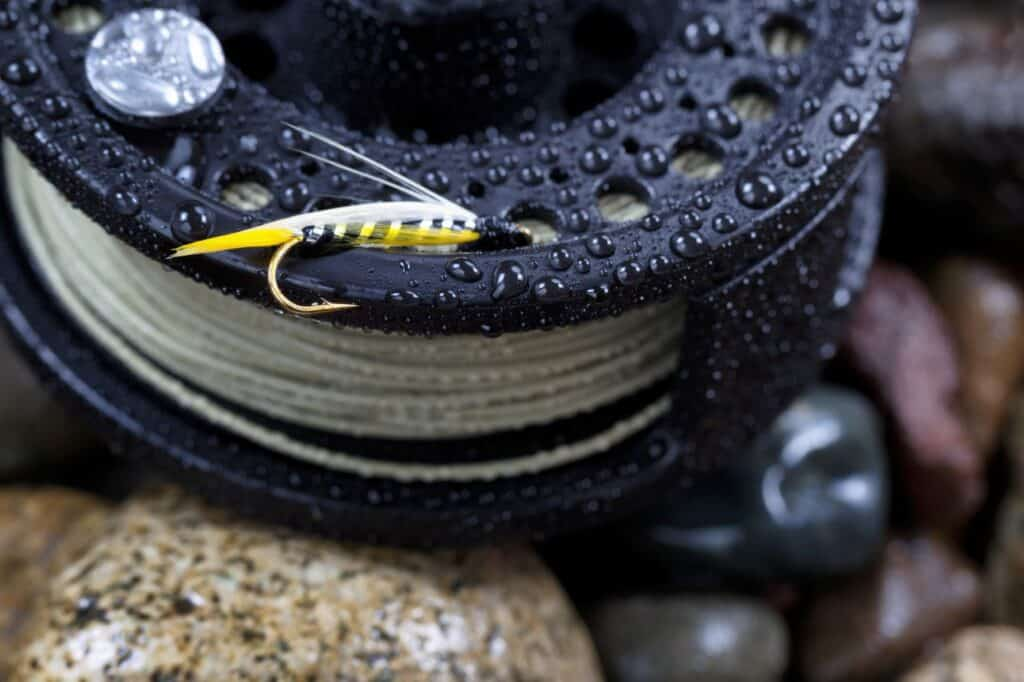 Fly Line for Beginners