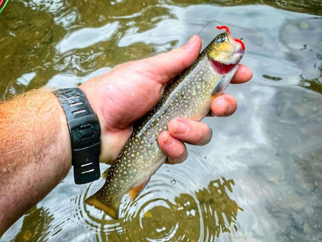 Best Trout Fishing In Iowa