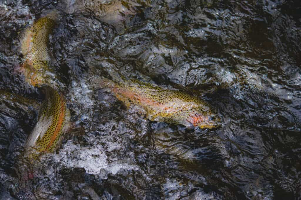 Best Trout Fishing In South Carolina
